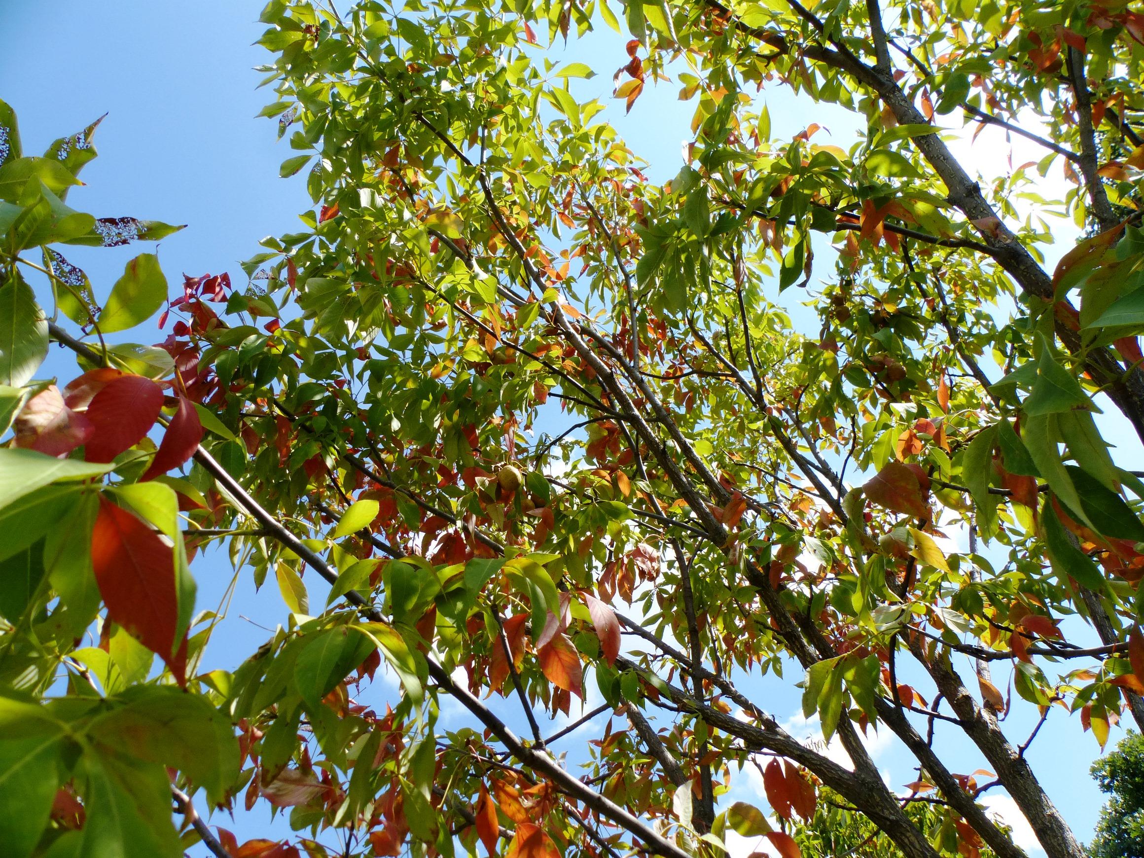 Fall Forecast II   BYGL