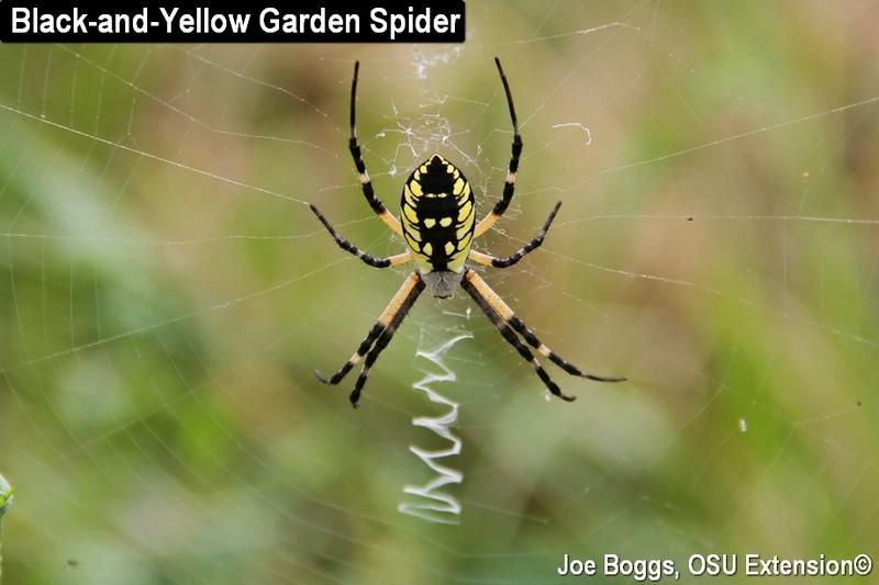 A Spider Encounter Bygl