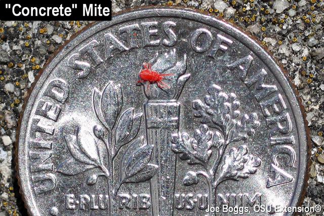 Concrete Mite