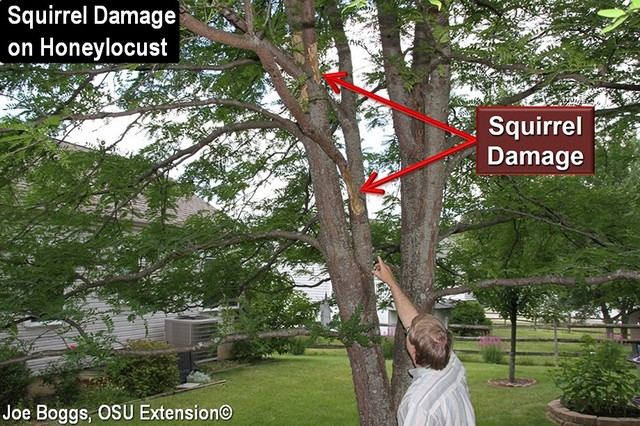 Squirrel Damage