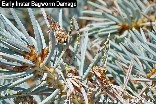 Be Alert to Bagworms! | BYGL