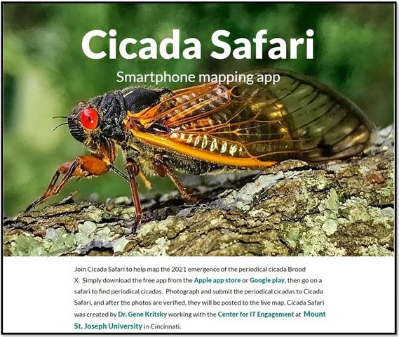 Cicada Safari Website