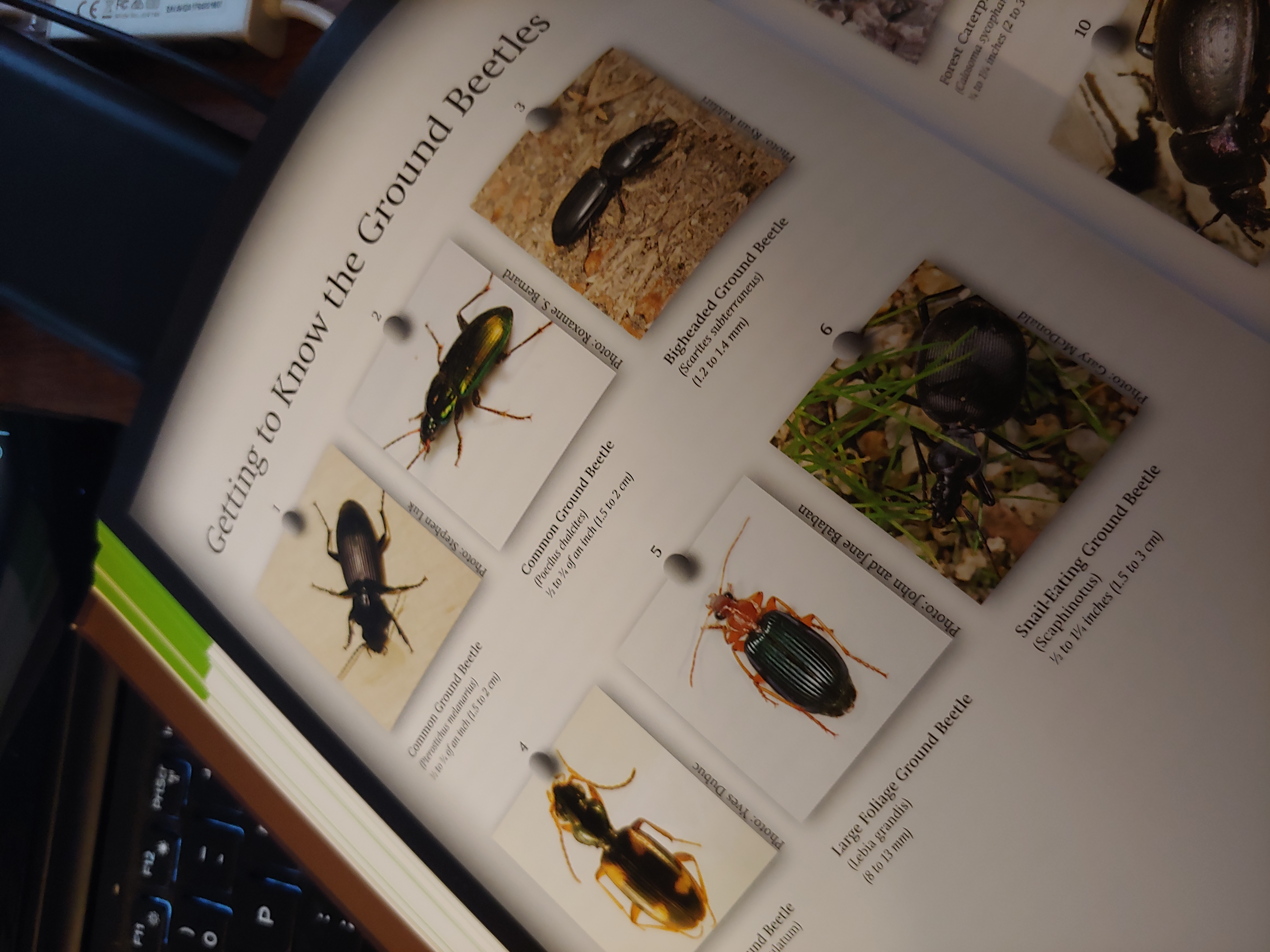 Photo of page from Mary Gardiner's Book, Good Garden Bugs