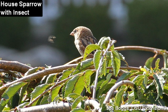 Hawk vs. Sparrows: Out My Front Door | BYGL