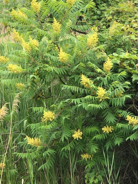 suman green flower