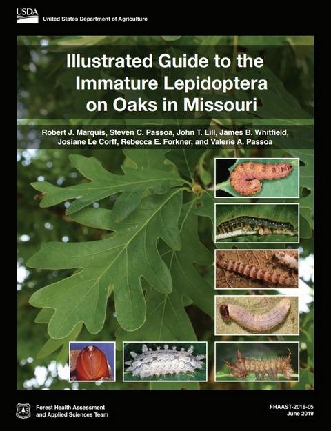 Caterpillar Guide