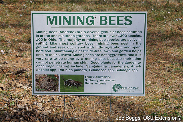 Mining Bees