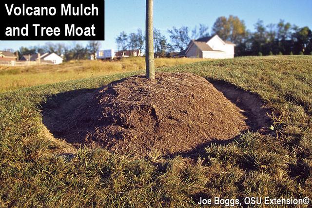 Volcano Mulch
