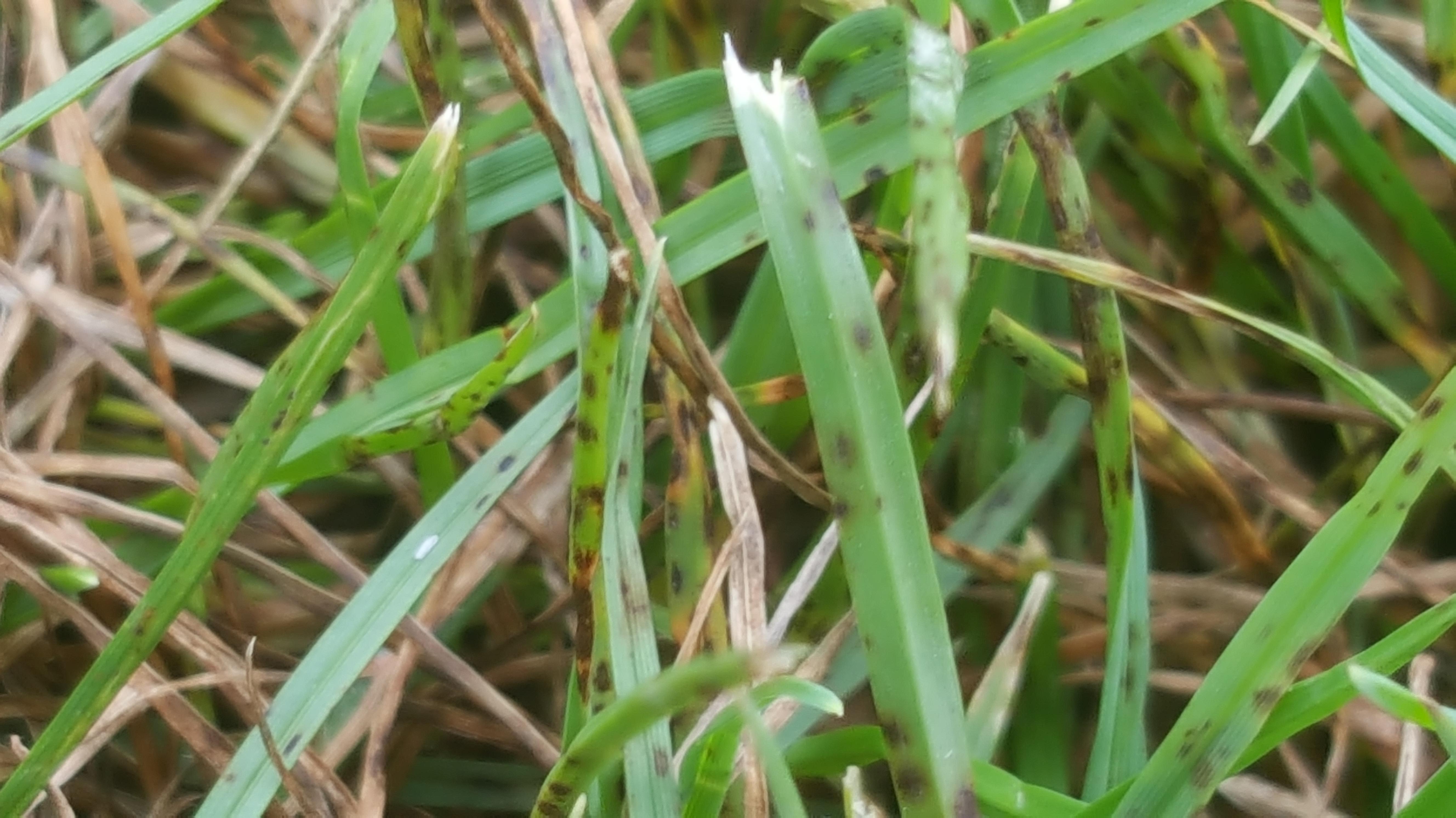 Leaf spot, close up on leaves