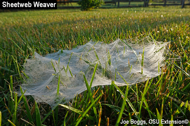 Sheetweb