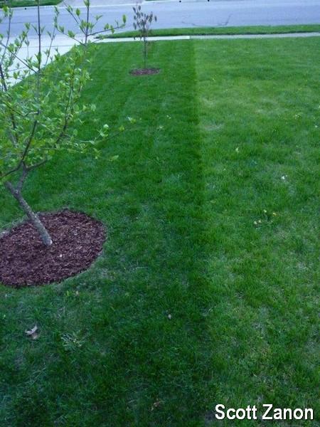 Fall fertilization of turfgrass