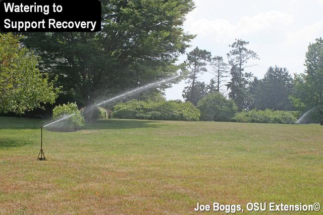 Turfgrass Irrigation