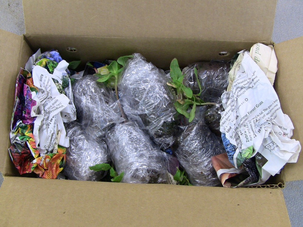 Seedlings carefully packaged in a box