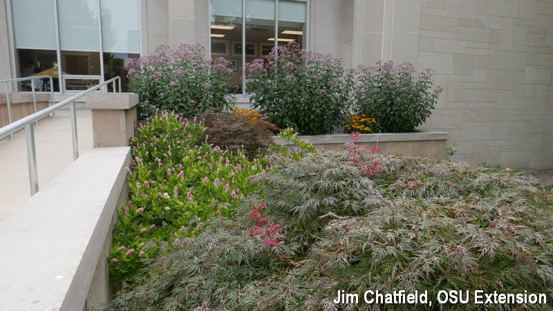 Clethra planting at the College of Wooster in Ohio