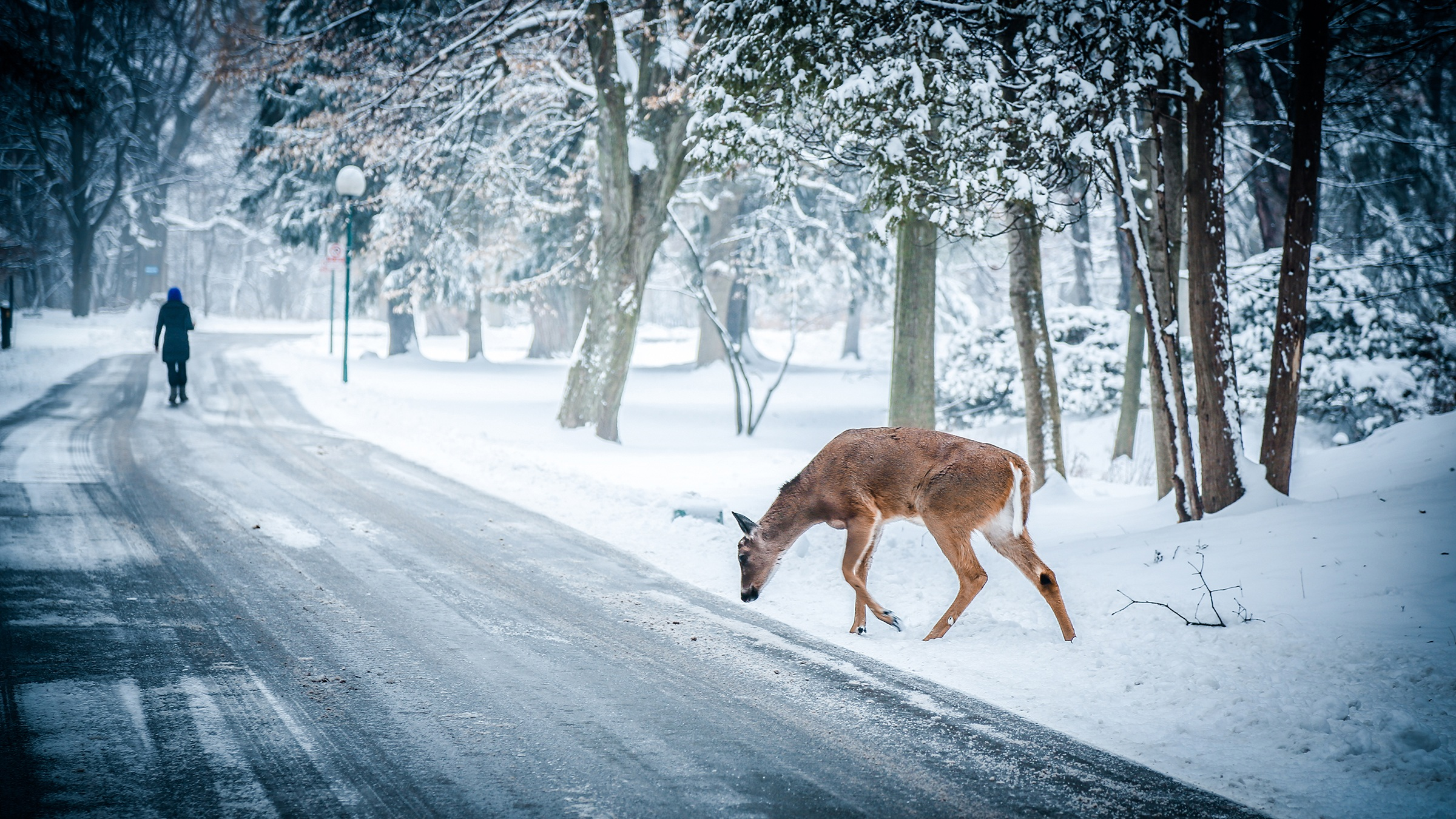 deer in winter on road