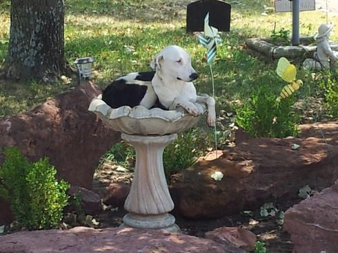 dog and birdbath. From Pinterest