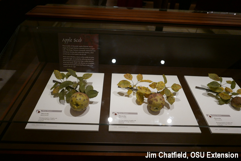 glass fruits of apple scab at Harvard