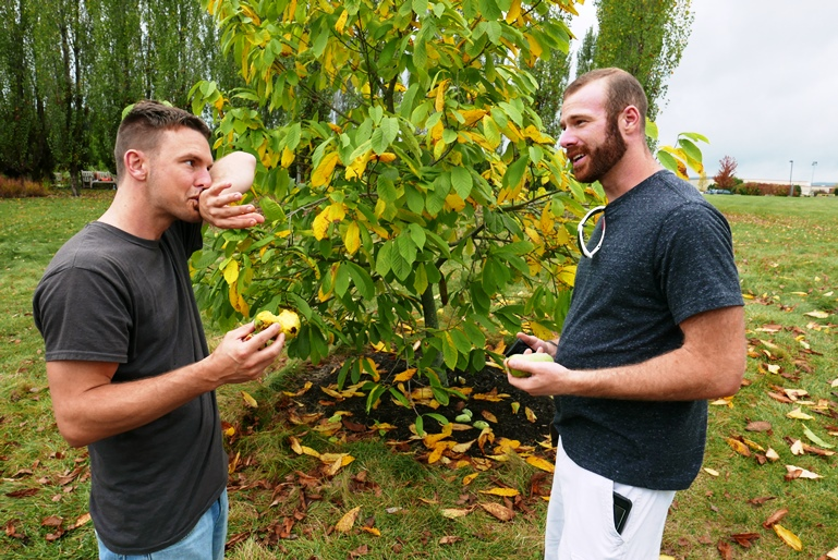 discussing pawpaws