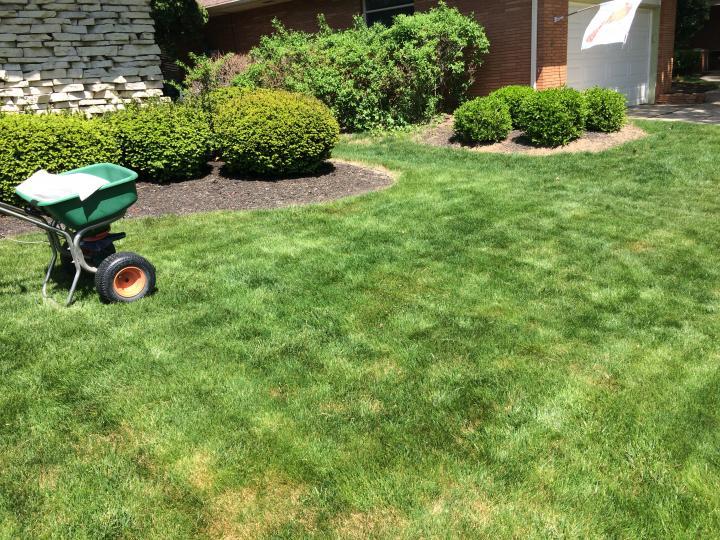 Spring Turfgrass Activity