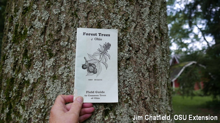 A 1927 Tree Identification Book