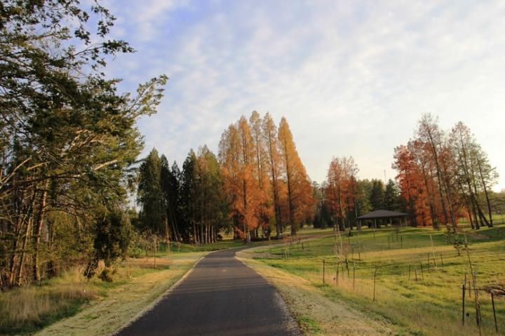 A trail to the dawnredwoods in fall at Secrest Arboretum