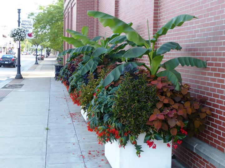 Planter with diversity inluding a banana plant