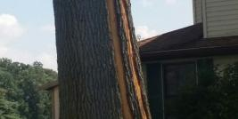 Lightning Damage and Trees