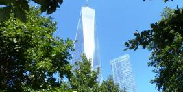 The Freedom Tower and the oaks