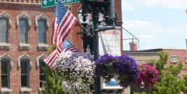 Petunias in Wooster Ohio