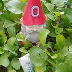 Lucas the Gnome Among the Radishes