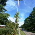 Vine growing up a pole