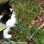 cat and weeds