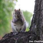 A squirrel in NYC's Central Park years ago
