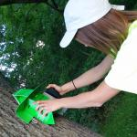 Gypsy Moth Trap Being Placed